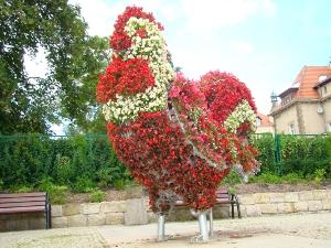Kwiatowy kogut - jeden z herbowych symboli miasta