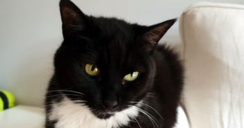 Kot – nieoczekiwana akcja ratunkowa