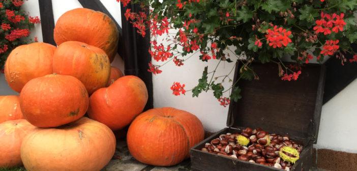 Jesieniara i dyniara – słowa roku